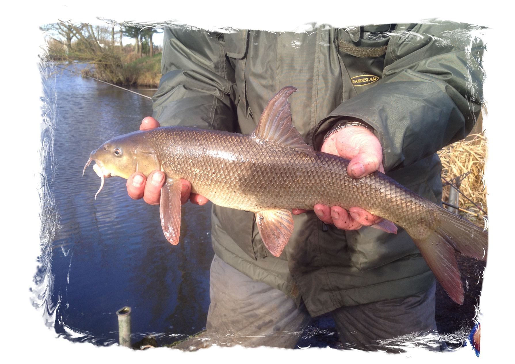 Barbel Fishing at Tetley Angling